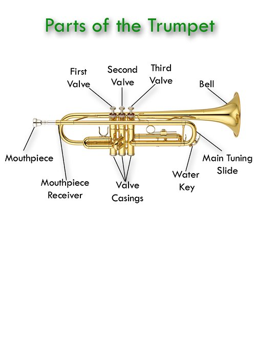 single reed woodwind instruments